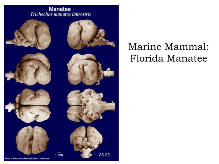 Marine Mammal: