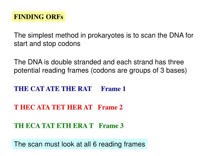 FINDING ORFs