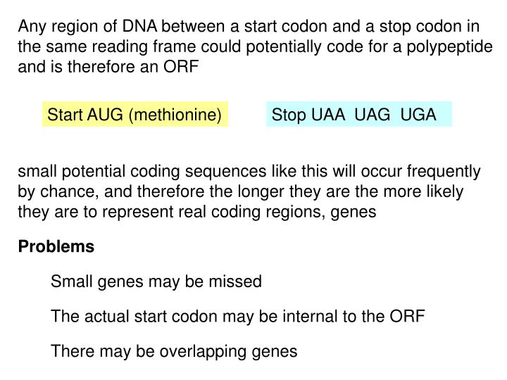 Any region of DNA between a start codon and a stop codon in