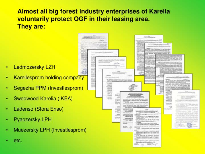 Almost all big forest industry enterprises of Karelia voluntarily protect OGF in their leasing area.