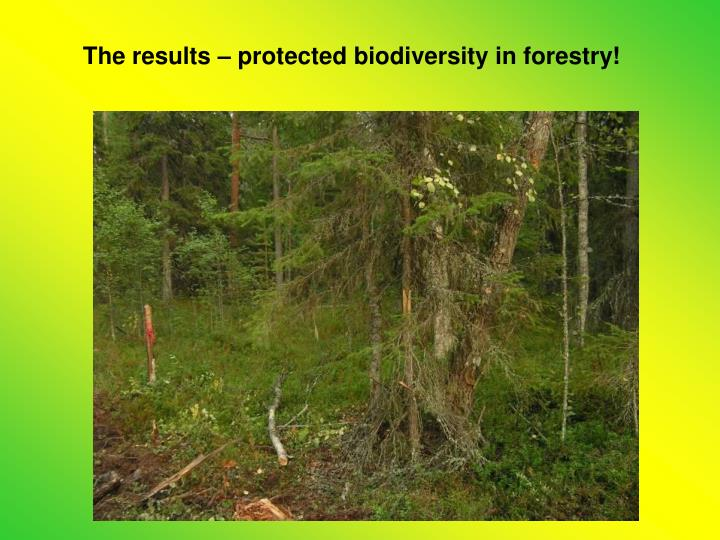 The results – protected biodiversity in forestry