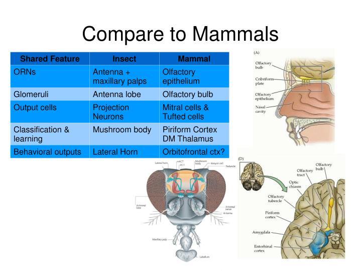 Compare to Mammals
