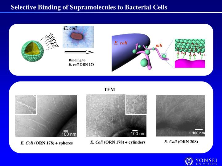 Selective Binding of Supramolecules to Bacterial Cells