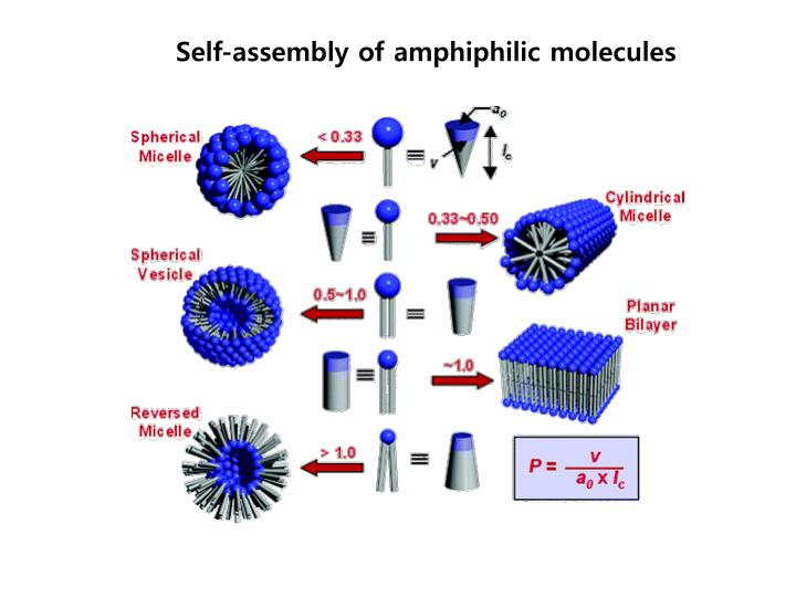 Self-assembly of amphiphilic molecules