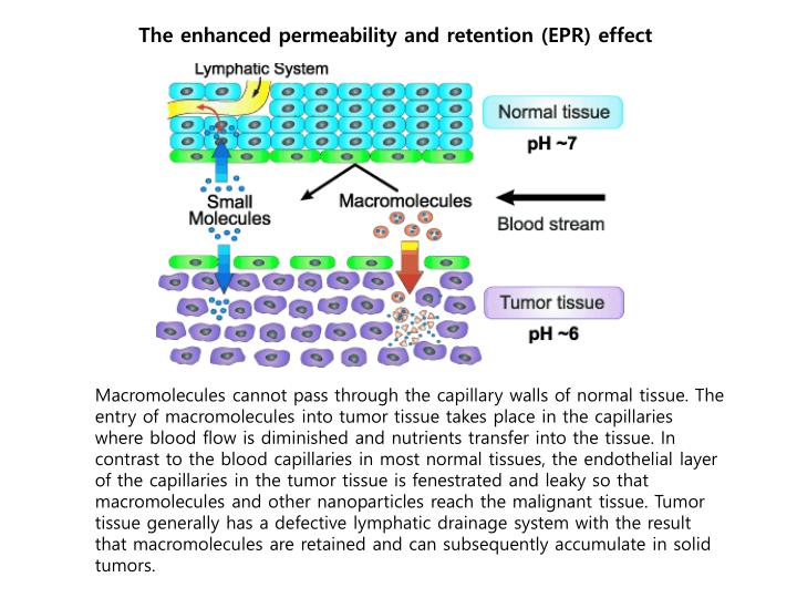 The enhanced permeability and retention (EPR) effect