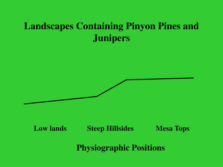 Landscapes Containing Pinyon Pines and Junipers