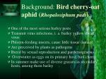 background bird cherry oat aphid rhopalosiphum padi