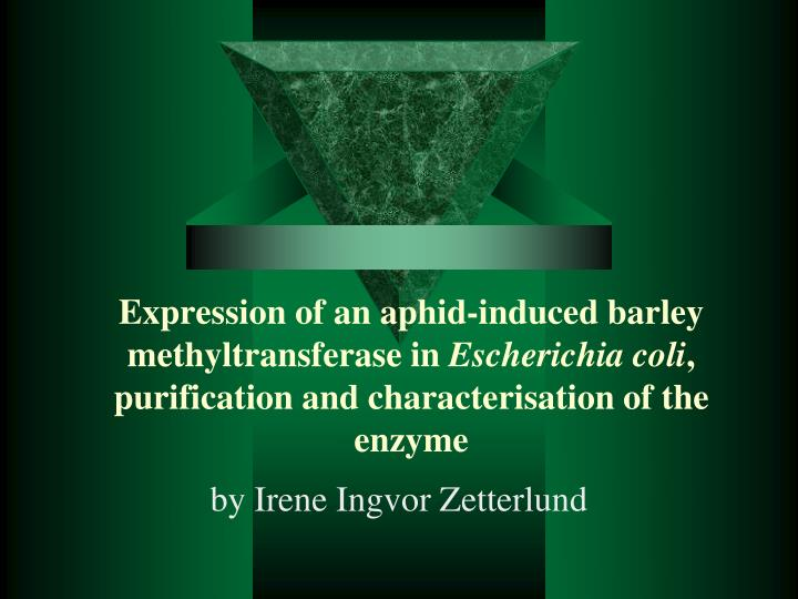 Expression of an aphid-induced barley methyltransferase in