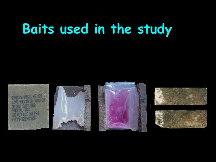 Baits used in the study