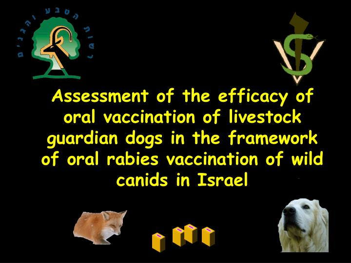 Assessment of the efficacy of oral vaccination of livestock guardian dogs in the framework of oral r...