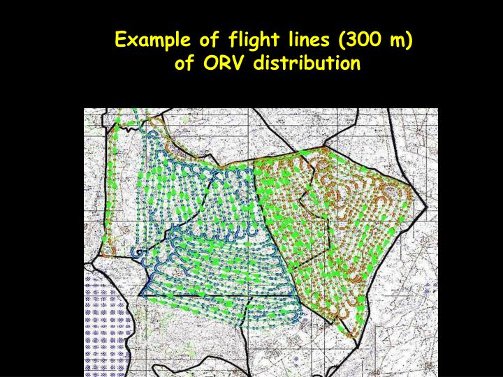Example of flight lines (300 m)