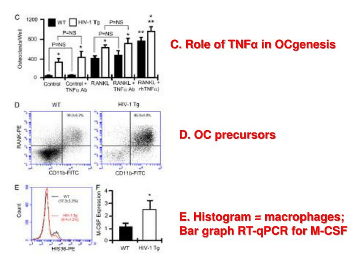 C. Role of TNF