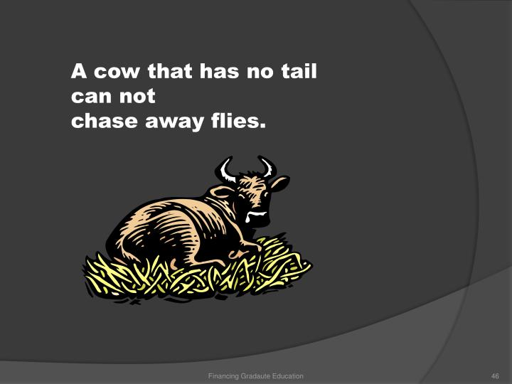 A cow that has no tail