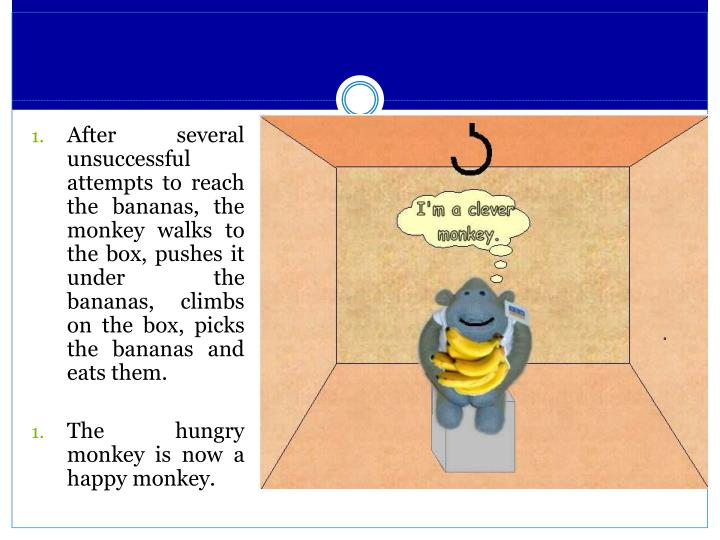 After several unsuccessful attempts to reach the bananas, the monkey walks to the box, pushes it under the bananas, climbs on the box, picks the bananas and eats them.