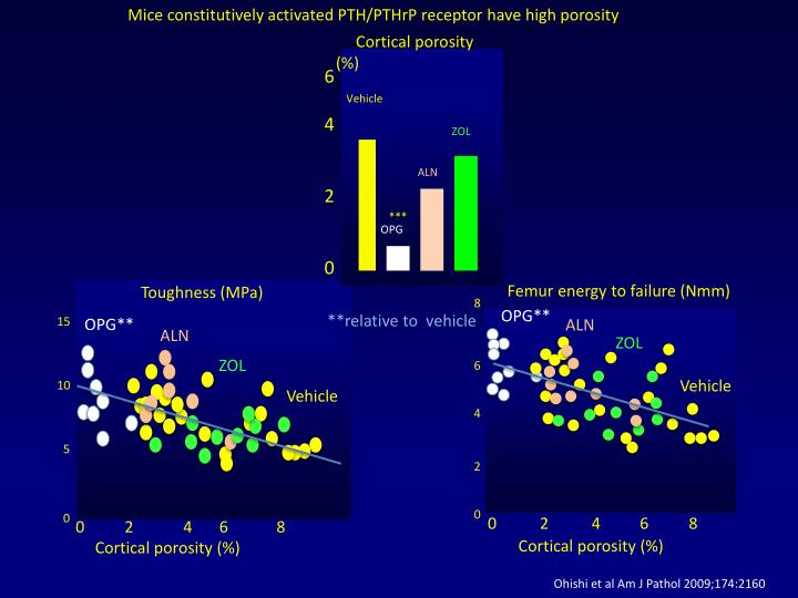 Mice constitutively activated PTH/PTHrP receptor have high porosity