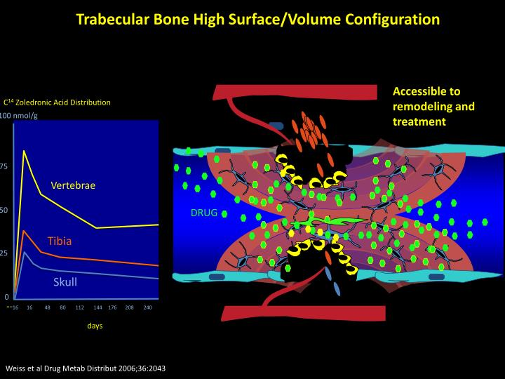 Trabecular Bone High Surface/Volume Configuration