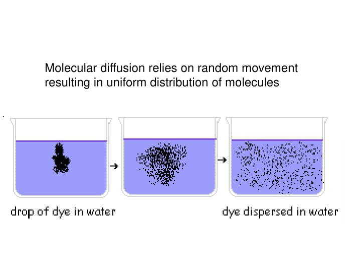 Molecular diffusion relies on random movement resulting in uniform distribution of molecules