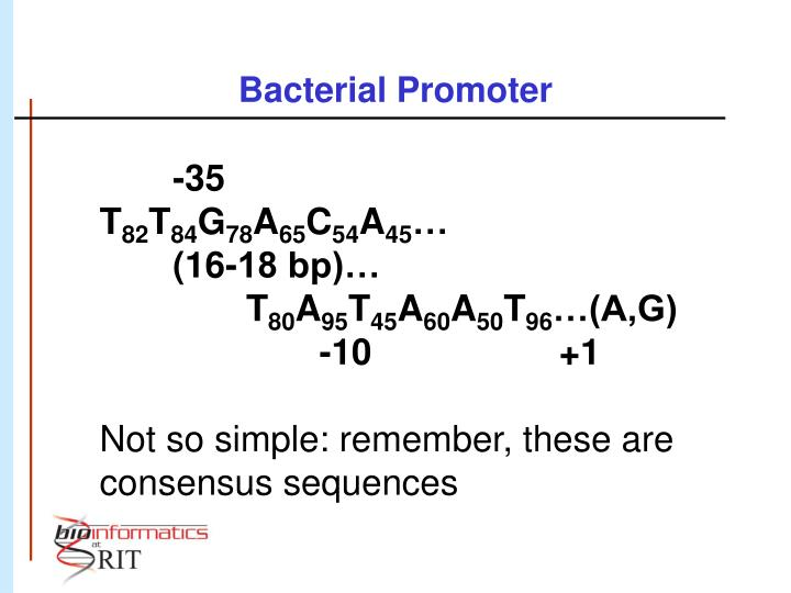 Bacterial Promoter