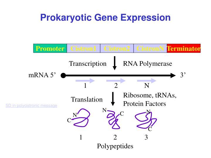 Ribosome, tRNAs,