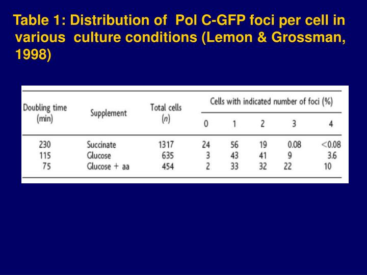 Table 1: Distribution of  Pol C-GFP foci per cell in various  culture conditions (Lemon & Grossman, 1998)