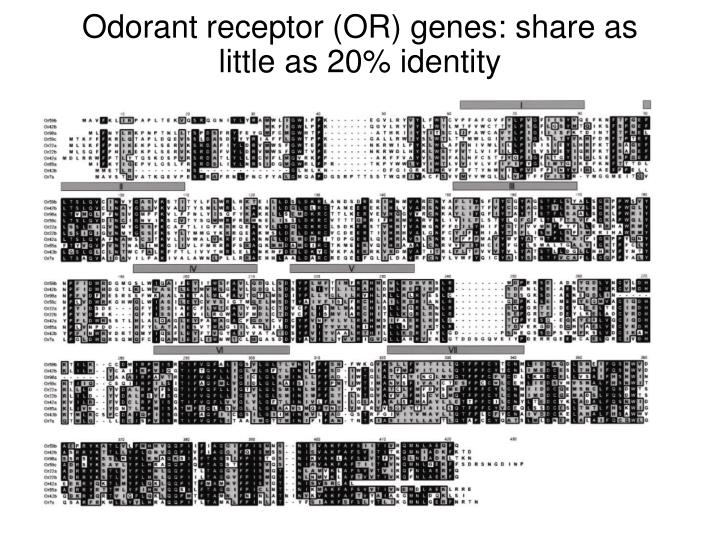 Odorant receptor (OR) genes: share as little as 20% identity
