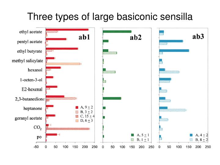 Three types of large basiconic sensilla