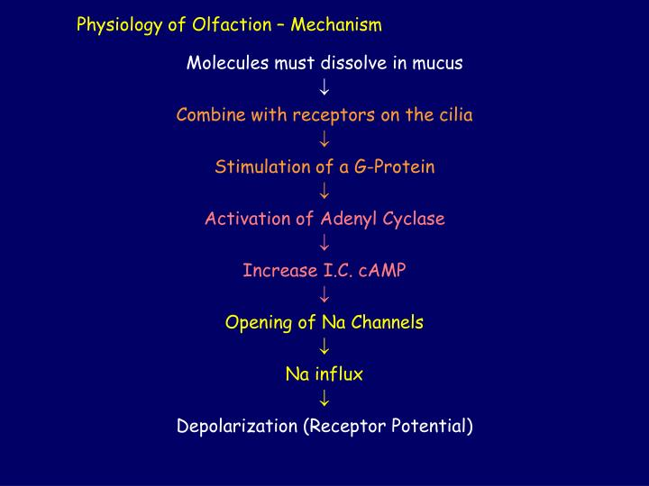 Physiology of Olfaction – Mechanism