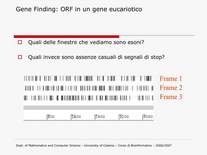 Gene Finding: ORF in un gene eucariotico