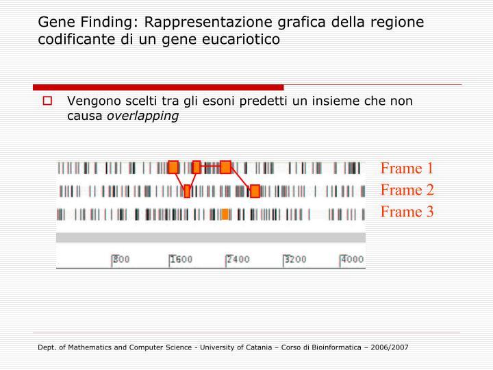 Gene Finding: Rappresentazione grafica della regione codificante di un gene eucariotico