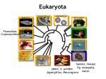 eukaryota2