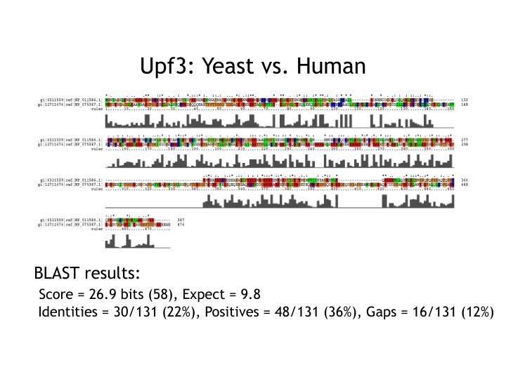 Upf3: Yeast vs. Human