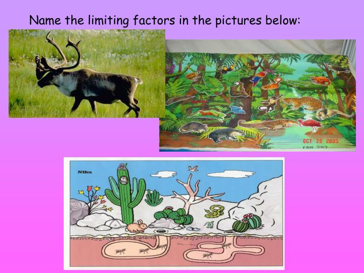 Name the limiting factors in the pictures below: