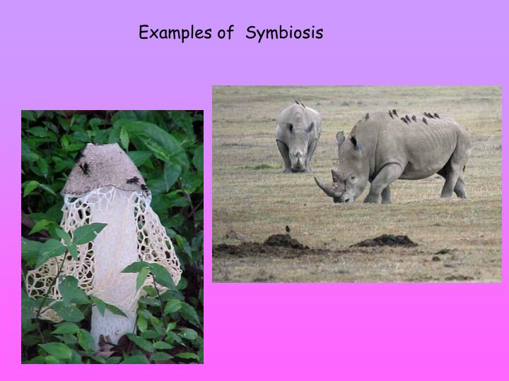 Examples of  Symbiosis