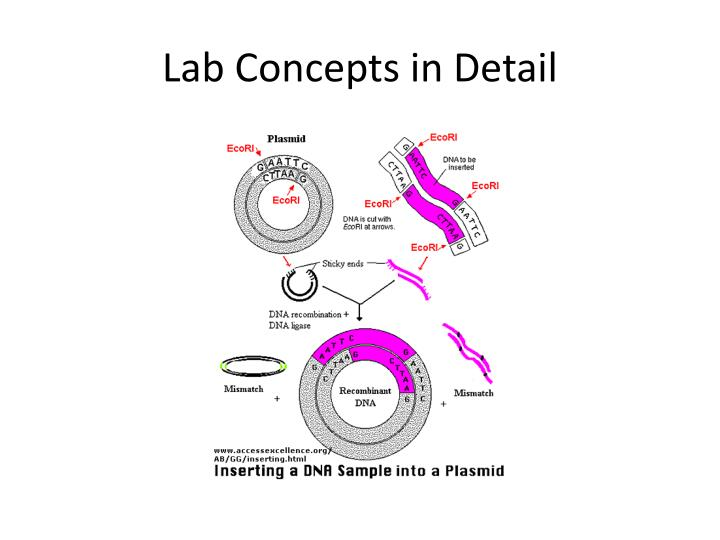 Lab Concepts in Detail