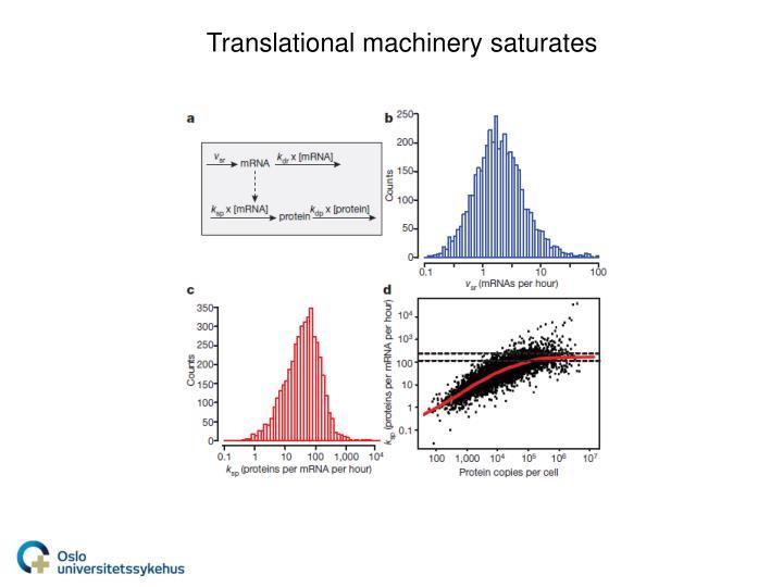 Translational machinery saturates