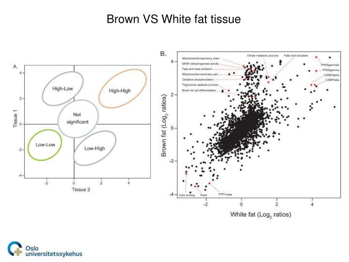 Brown VS White fat tissue