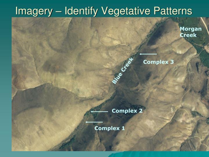 Imagery – Identify Vegetative Patterns
