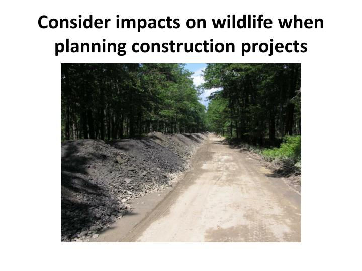 Consider impacts on wildlife when planning construction