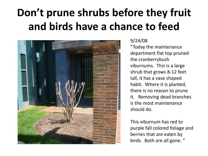 Don't prune shrubs before they fruit and birds have a chance to feed