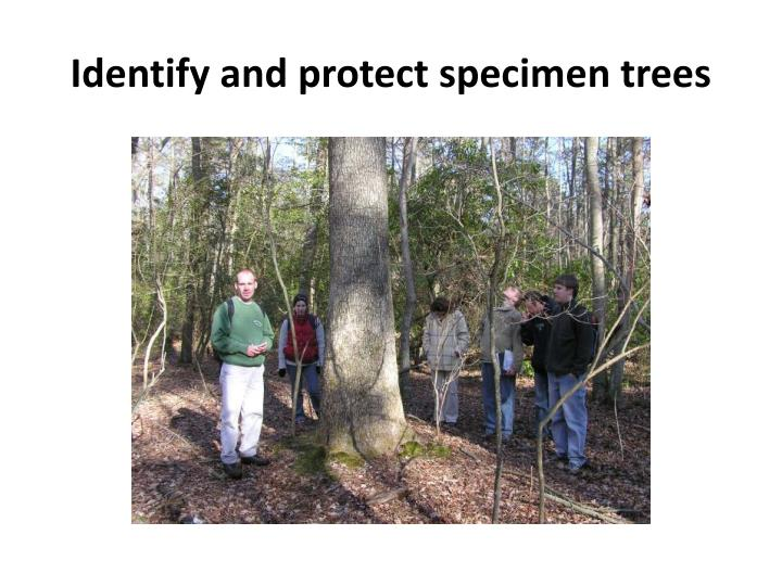 Identify and protect specimen trees