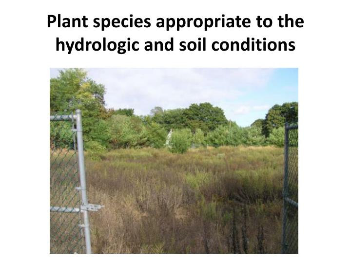 Plant species appropriate to the hydrologic and soil conditions