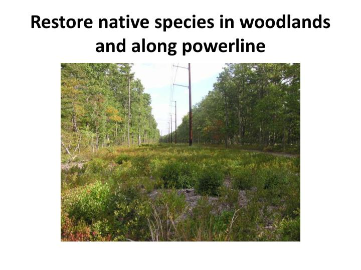 Restore native species in woodlands and along powerline