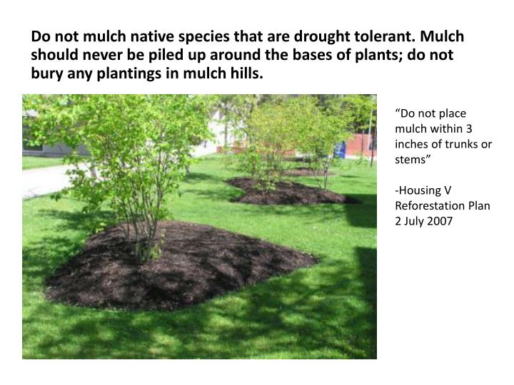 Do not mulch native species that are drought tolerant. Mulch should never be piled up around the bas...
