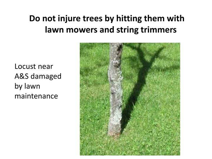 Do not injure trees by hitting them with lawn mowers and string trimmers
