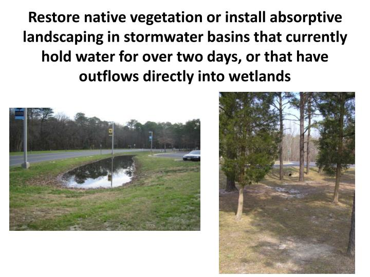 Restore native vegetation or install absorptive landscaping in stormwater basins that currently hold water for over two days, or that have outflows directly into wetlands
