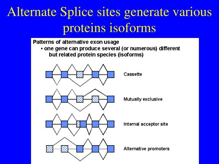 Alternate Splice sites generate various proteins isoforms