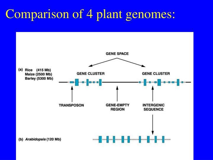 Comparison of 4 plant genomes: