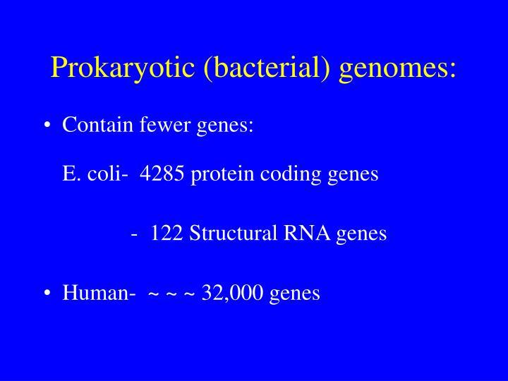 Prokaryotic (bacterial) genomes: