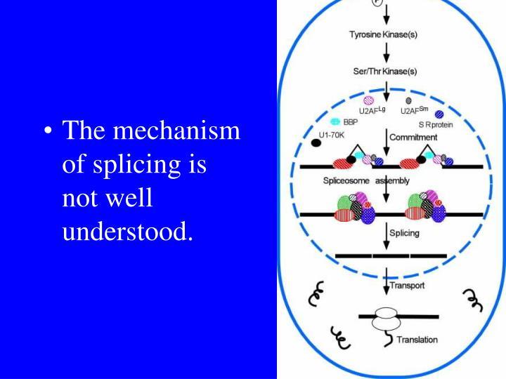 The mechanism of splicing is not well understood.