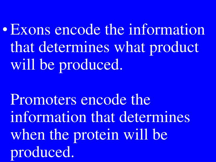 Exons encode the information that determines what product will be produced.